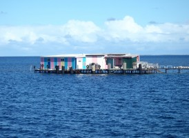 At the Abrolhos Islands we created an aquaculture grafting room (which also included building a jetty to build this structure on over water) which complies with our Biosecurity Plan.